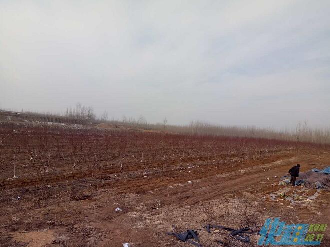 白浪河營丘大面積養殖土地轉讓