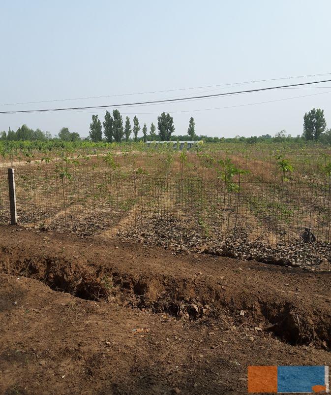 杨家埠生态开发区优质苗圃转让